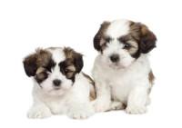 Puppy Scams – Please Read!